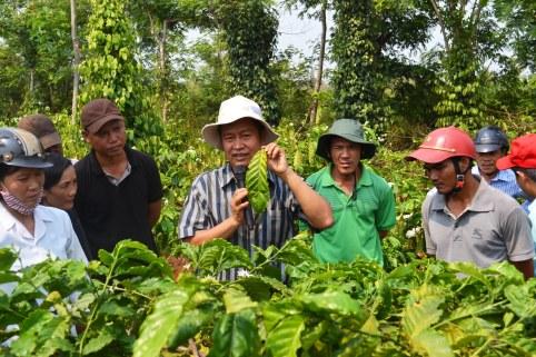 Chuyên gia Viện KH NLN Tây Nguyên hướng dẫn nông dân dấu hiệu nhiễm bệnh trên lá cà phê