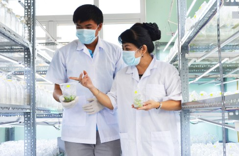 Kỹ sư Hoàng hướng dẫn phóng viên thăm phòng nuôi cấy mô
