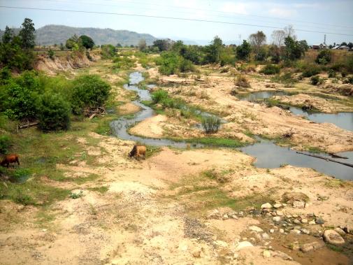 Đàn bò nhởn nhơ gặm cỏ dưới dòng sông Ba