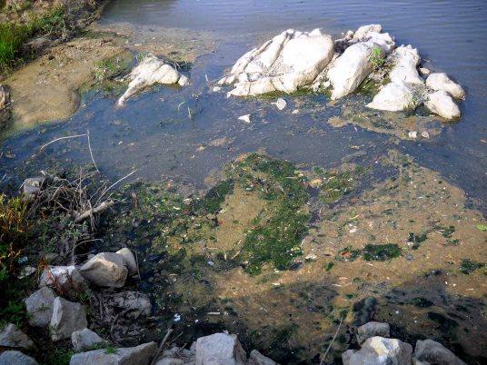 Dòng sông Ba đoạn qua huyện Kbang thị xã An Khê bị cạn kiệt bốc mùi hôi thối