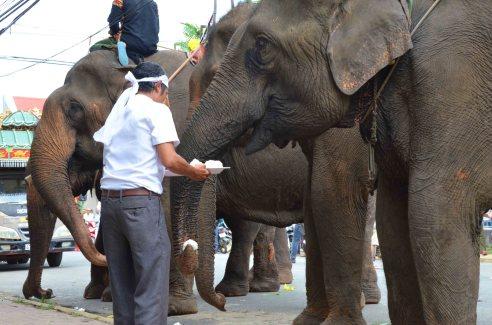 Em út Mẹ Voi theo cách chị cho voi ăn cơm nắm