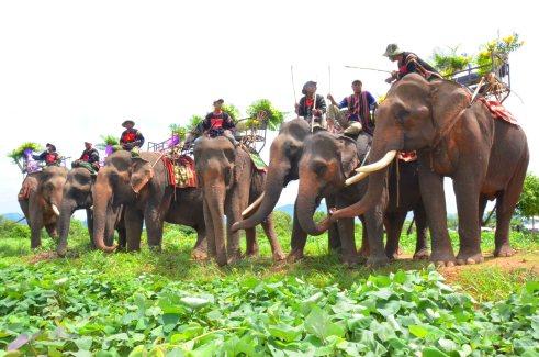 Nhiều con voi cùng khóc trong khi chờ tiễn biệt linh cữu