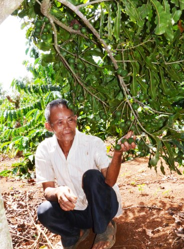 Ông An với cây mắc ca ra trái mùa đầu