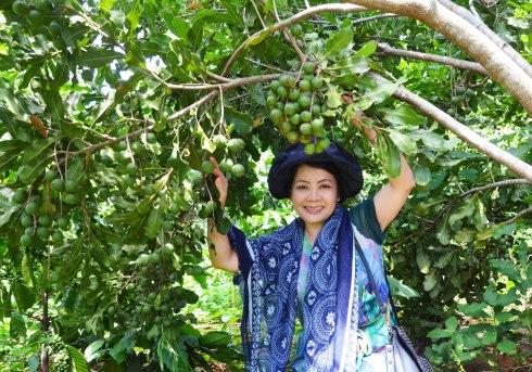 Mắc ca trồng năm thứ 5 trong vườn ông Đinh Minh Đại