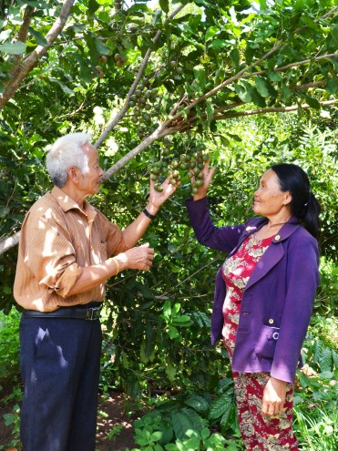 Vợ chồng ông Đại với một cây mắc ca đang chín