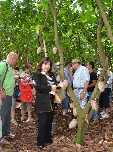 Đoàn du khách Pháp thăm vườn ca cao