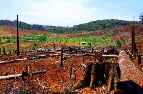 Một tiểu khu rừng dân tự phá trái phép để lập thôn Nghĩa Tín xã Quảng Thành thị xã Gia Nghĩa tỉnh Đắk Nông