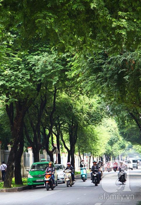 Hàng me Nguyễn Du 1/2015
