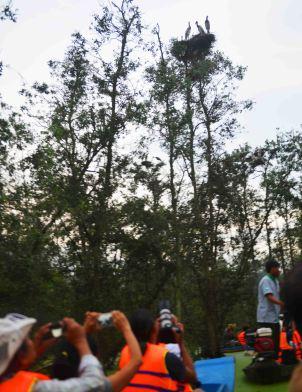 Săn ảnh lúc chim về tổ tại Vườn Quốc gia Tràm Chim