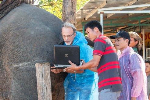 Tiến sĩ Willem và cán bộ Trung tâm Bảo tồn voi Đắk Lắk tiến hành siêu âm tính tuổi thai cho voi Ban Nang